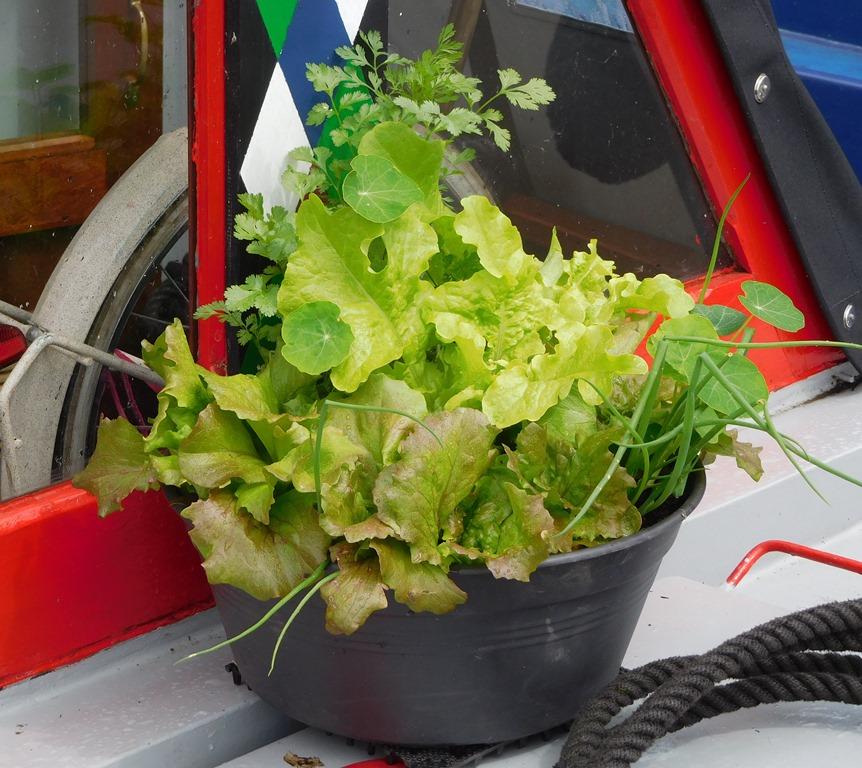 [10+salad+bowl%5B6%5D]