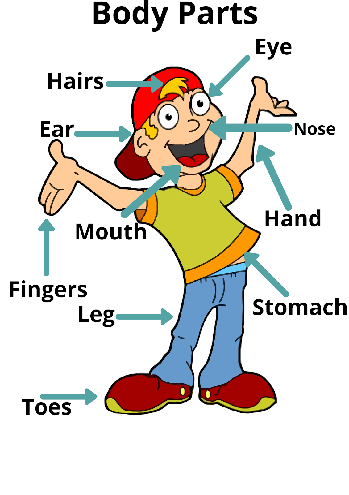Body Parts For Toddlers