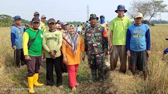 Sambut Musim Tanam Padi , Para Tokoh Dan Babinsa TNI Desa Sindangmukti Bongkar Saluran Air Pertanian