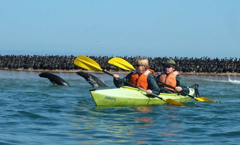 Kayaking off Pelican Point