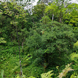 06-23-13 Big Island Waterfalls, Travel to Kauai - IMGP8841.JPG