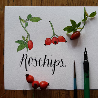 www.AliceDrawsTheLine.co.uk :: Rosehips