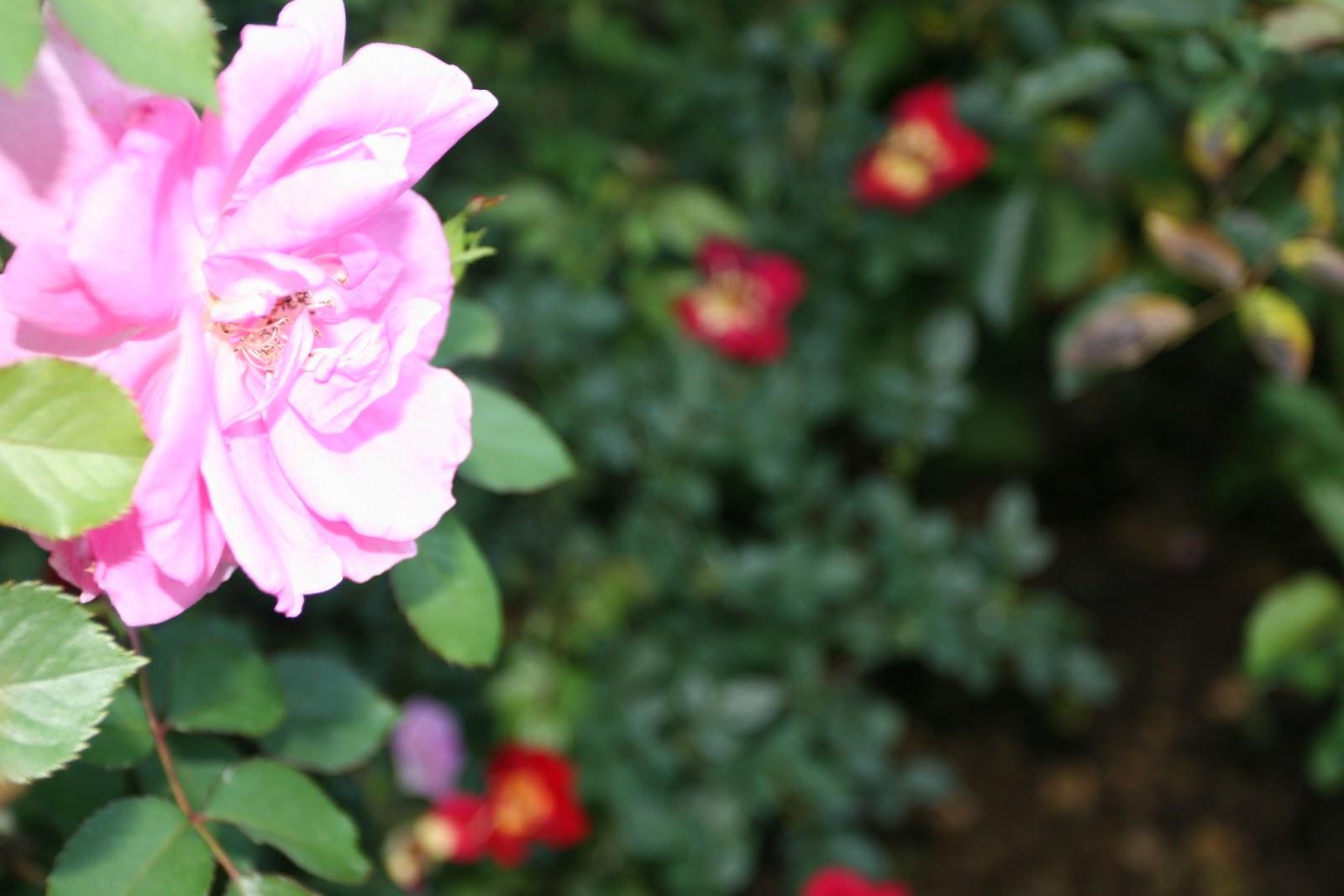 Gardening 2012 - IMG_2786.JPG