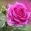 Donnamarie Toscano Larios's profile photo