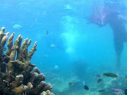 Pulau Harapan, 23-24 Mei 2015 GoPro 34