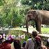 Kebun Binatang Ragunan Sejarah Taman Margasatwa Pertama di Indonesia Tempat Wisata Favorit Keluarga