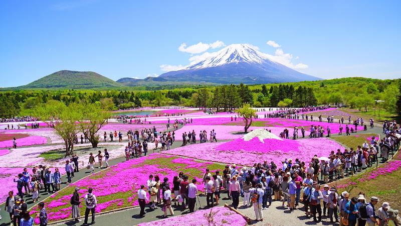 富士芝桜まつり 写真7