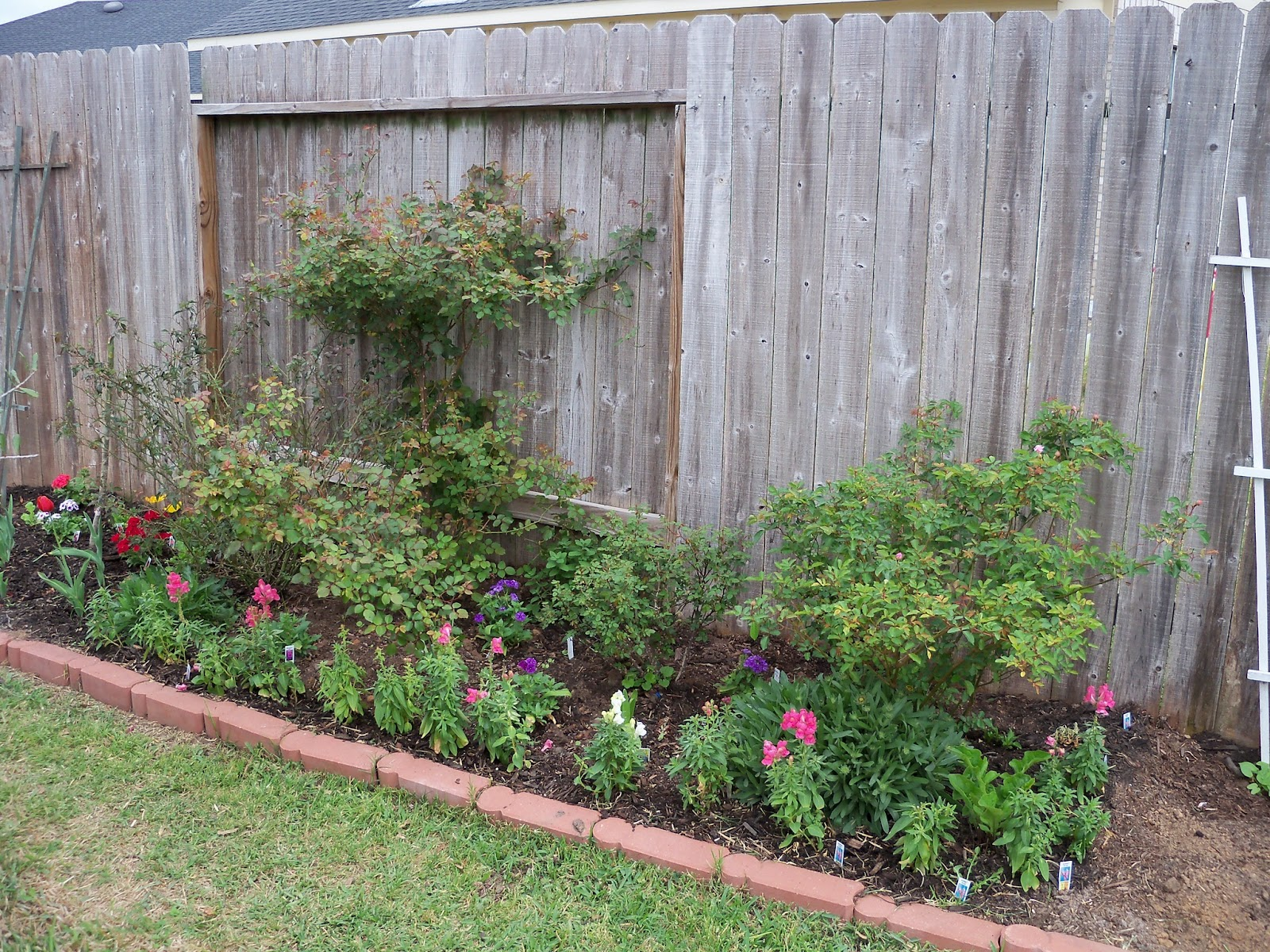 Gardening 2011 - 100_6786.JPG
