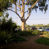 The Blue Tree at OBC in Gabs