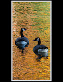 """Autumn Geese"" by Valerie Henschel -- 2nd Place Digital Special A"