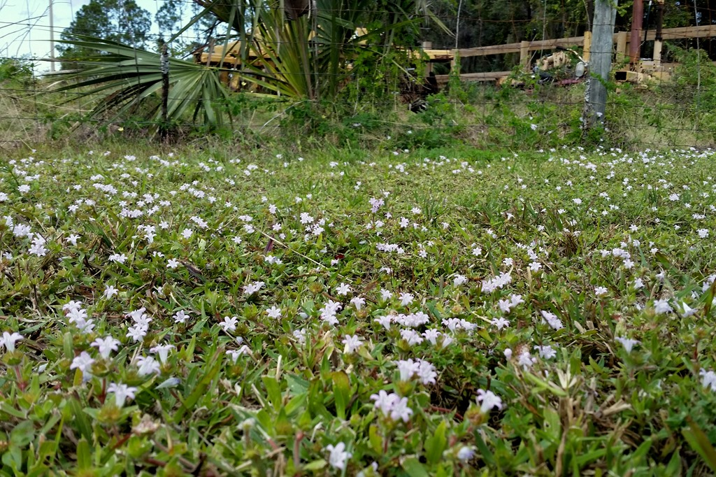 [Wildflowers%5B3%5D]