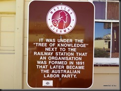 180510 111 Barcaldine Tree of Knowledge