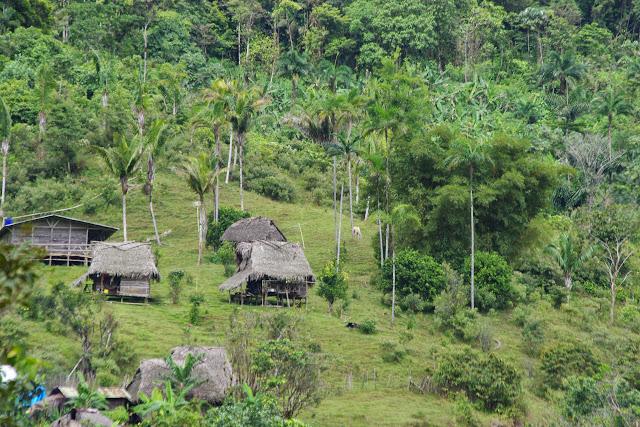 Route de Santa Fe à Guabal, 850 m (Veraguas, Panamá), 19 octobre 2014. Photo : J.-M. Gayman