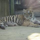 TIGERS Preservation Station - Myrtle Beach - 040510 - 19