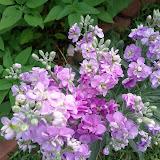 Gardening 2013 - IMG_20130330_094642.jpg