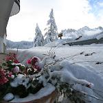Blumen im Winter.JPG