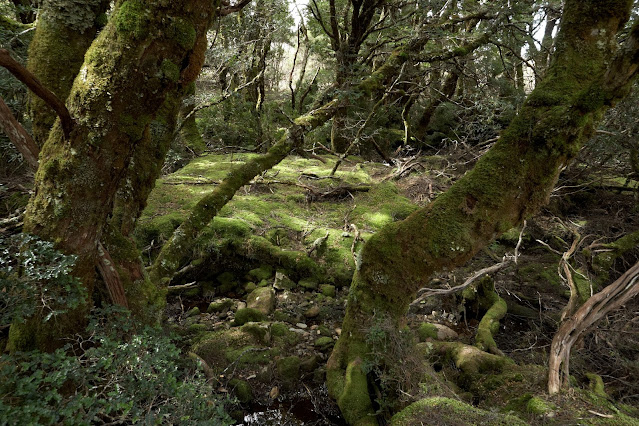 The Enchanted Walk at Cradle Mountain takes us into the tranquil rainforest