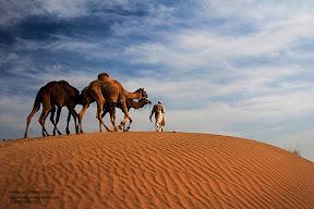 A camel caravan through the Thal desert.