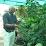 SwamiDhyanAnand Bharati's profile photo