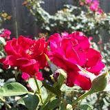 Gardening 2009 - 101_5218.JPG