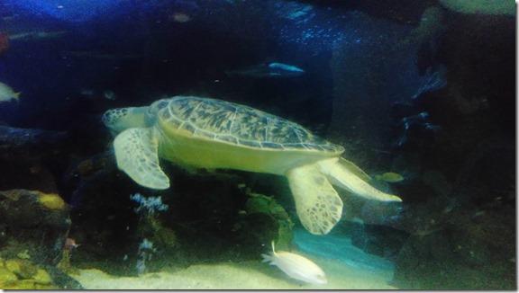 mo the turtle