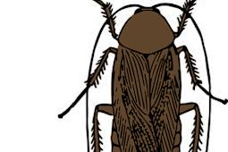 Metamorfosis Kecoa dan Sampah Kompos