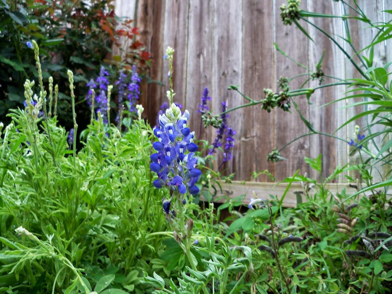 Gardening 2014 - 116_2587.JPG