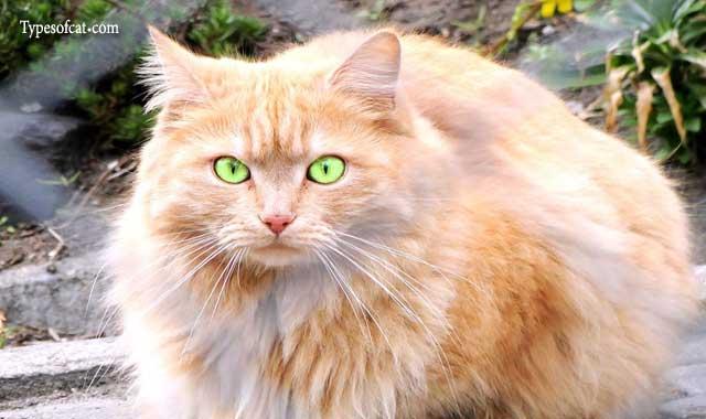 Common Cat Breeds