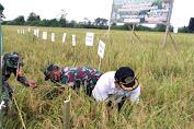 Meski Ditengah Pandemi, Panen Raya Dengan Penerapan Tekhnologi Biotani di Sultra Digelar di Kabupaten Konawe
