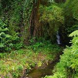 06-23-13 Big Island Waterfalls, Travel to Kauai - IMGP8883.JPG