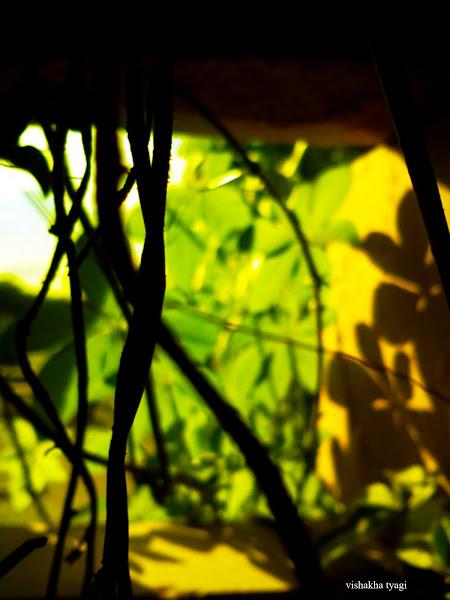 Photo: Green filter.