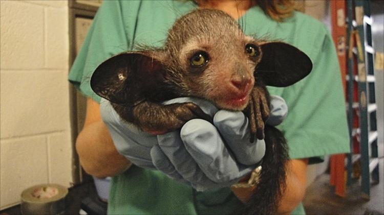 ведет наши фото с надписью самые редкие виды животных мультфильм