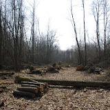 Déforestation (légale ?). Les Hautes-Lisières (Rouvres, 28), 25 mars 2012. Photo : J.-M. Gayman