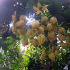 Flora del Chocó