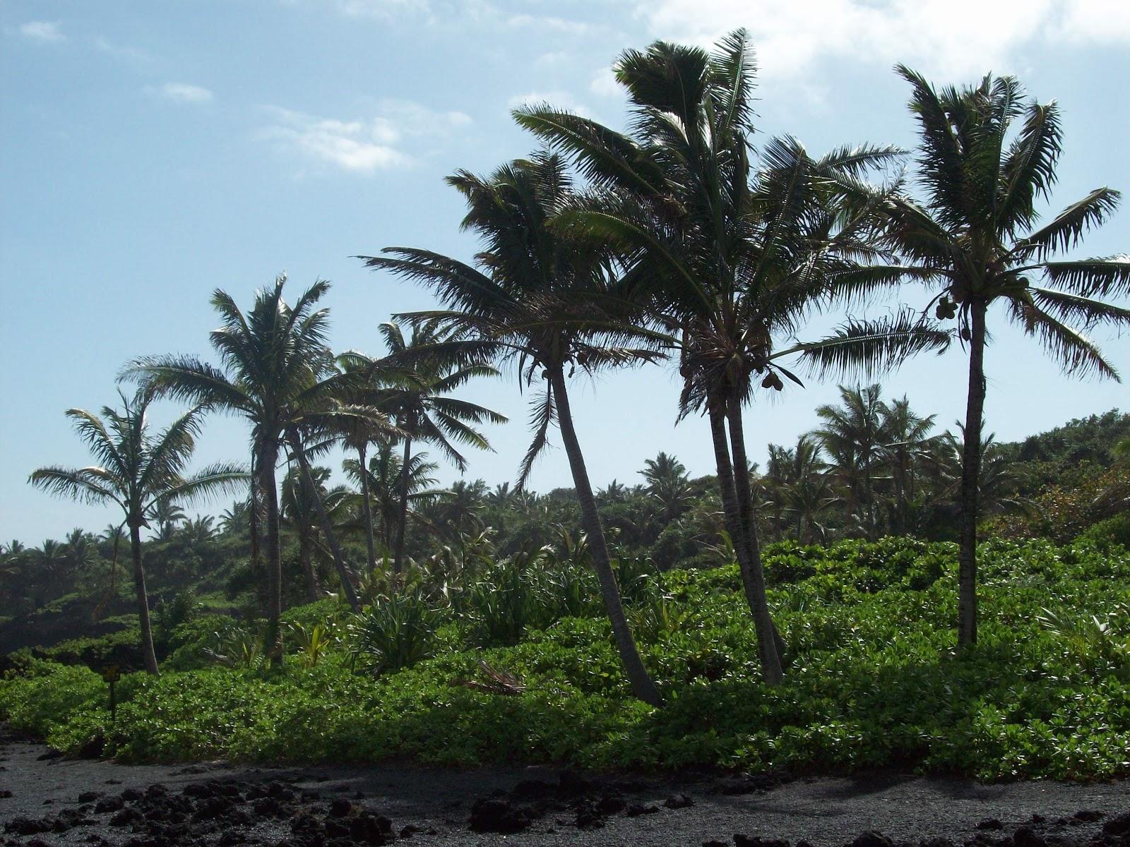Hawaii Day 5 - 114_1538.JPG