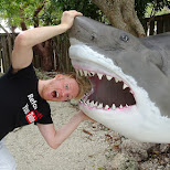 getting eaten by a huge shark in Key Largo, Florida, United States