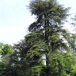 Parc de la Maison de Chateaubriand : brebis