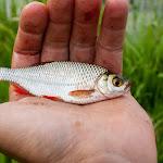 20160717_Fishing_Zhalianka_027.jpg