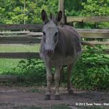 05-11-12 Wildlife Prairie State Park IL - IMGP1622.JPG