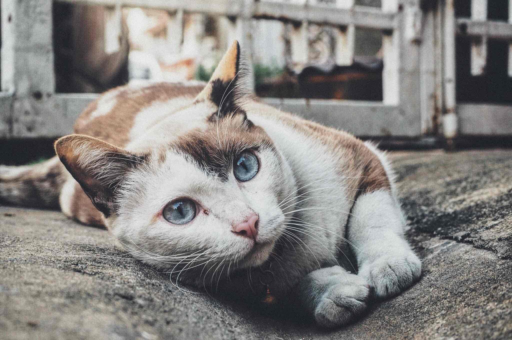Imagenes muy lindas de gatitos2