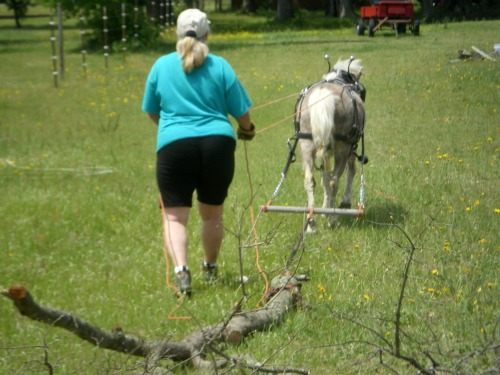 Logging at LP Painted Ponys