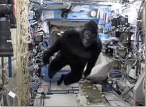 ASTRONAUT IN A SWIMSUIT GORILLA FLOATING AROUND THE ISS