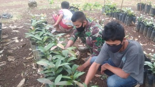 Kebersamaan Terjalin di Kebun Bibit Manggis