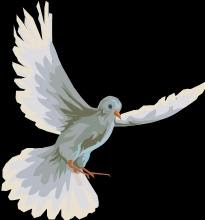 colomba stilizzata