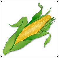 คำศัพท์ภาษาอังกฤษ_corn_Vegetable