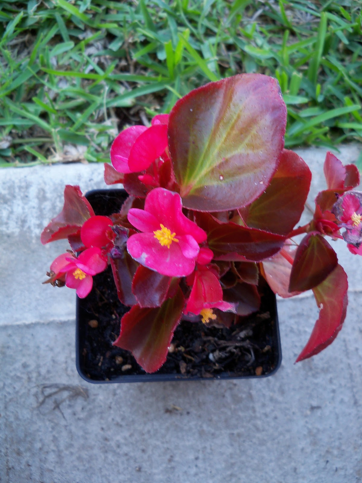 Gardening 2010 - 101_1496.JPG