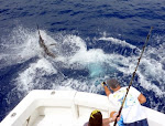 Tobin Hudgens leadering a Pacific blue Marlin, May 21, 2011 (Doomsday) for the Johnson's and Cupples group.