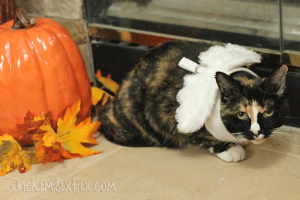 Cat in angel costume