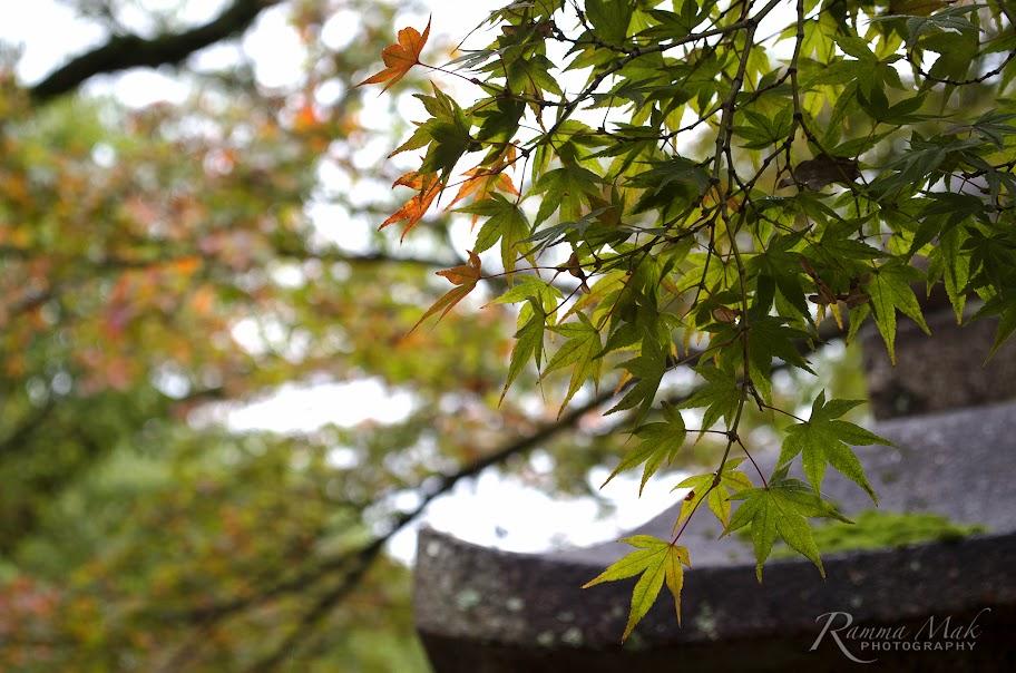 八板神社內的紅葉稀疏
