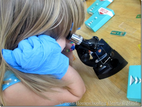 Looking through a microscope at Homeschooling Hearts & Minds